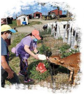 Community OutReach participants feeding calf